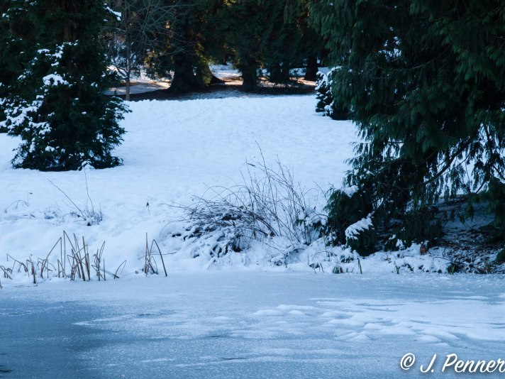 - Frozen Pond -